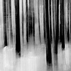 n112 (Thilo Schmautz) Tags: wald bume weingarten bannwald