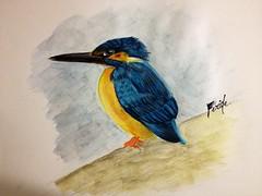 (Feridecinarli) Tags: bird art illustration sketch artwork drawing kingfisher watercolour