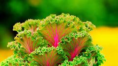 green.... (mauroheinrich) Tags: flowers flores verde green brasil cores nikon natureza flor nikkor nikondigital riograndedosul 28300 nikonians ibirubá nikonprofessional fotógrafosbrasileiros fotógrafosgaúchos d300s 28300vr fotógrafosdosul nikonword mauroheinrich