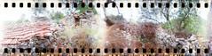 Ruin - 10Sep13, Prozura (Croatia) - 03 (]) Tags: blur max tree abandoned film stone 35mm tile blurry lomography kodak pierre decay ruin dream croatia 360 scan ruine 400 horror dreamy nightmare analogue 135 35 arbre ultra tuile flou spinner argentique 360 sprocket croatie cailloux horreur abandonn cran rve ngatif pellicule dcrpitude cauchemar dcrpi kodakultramax400 prozura spinner360