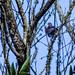 "São Francisco do Sul/SC - 20/10/2013 - O Dragao de Sao Francisco, Parque Estadual Acarai. Foto: Anderson Gomes • <a style=""font-size:0.8em;"" href=""http://www.flickr.com/photos/39546249@N07/10391604194/"" target=""_blank"">View on Flickr</a>"