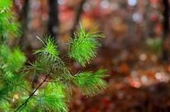 (DigitalCanvas72) Tags: fall abandoned nature leaves sepia landscape outdoors nikon bokeh farm 85mm nikkor 70300mm vr 18g dxnikkor 1024mm vrnikkor 1685mm d7000 nikond7000