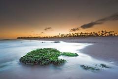 At sunset in Imbassai (PL 62) Tags: sunset sea brazil seascape praia beach brasil mar seaside sand coconut bahia imbassai