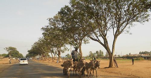 Donkey cart, Njoro