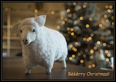 Bèèèrry Christmas! (Ciao Anita!) Tags: mostra christmas friends netherlands sheep bokeh nederland exhibition natale nativity olanda kerstmis noordholland presepe presepio kerstkaart schaap kerststal pecora christmascrib egmondbinnen abdyvanegmond staldalbertabdij