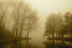 Naked trees in the mist (Fotis Korkokios) Tags: autumn trees winter mist lake water leaves fog sepia dark naked rotterdam branches thenetherlands ducks goose kralingen