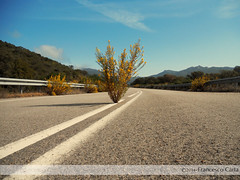 Strada fumosa (Francesco Carta) Tags: strada natura pianta vegetazione abbandonata incompiuta potd:country=it potdcountryit