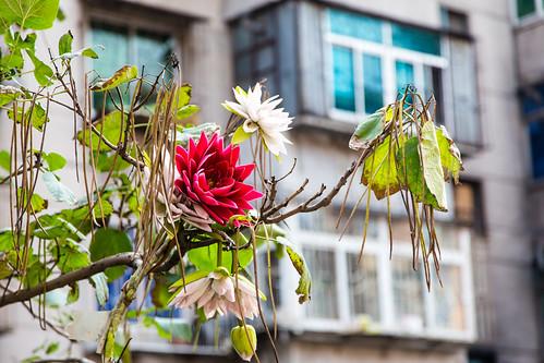 Fushun flowers