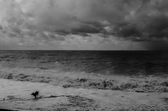 Black Dog / Black Sea (Levan Kakabadze) Tags: