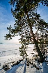 Island (maaniemi) Tags: winter sun lake 3 cold ice canon frost mark freezing 5d mk tero jrvi j mkiii aurinko mk3 mark3 pijnne markiii kylm maaniemi pakkanen