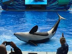 Trua (b_g_19) Tags: show orlando dolphin sw orca seaworld shamu swf showpool oneocean