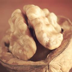 Brain... training (cazadordesueos) Tags: stilllife food macro comida creative walnut shell brain alimento squareformat mind nut cerebro mente nuez fruto creativo cscara