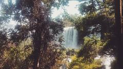 Iguazu Falls. Argentina. February 2016. (NeonOnHerSkin) Tags: summer southamerica nature argentina falls jungle waterfalls iguazu iguazufalls