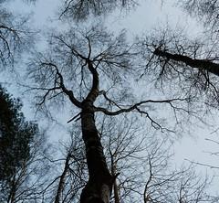 Trd (henkeiP) Tags: tree sweden trd
