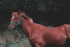 (micaelacelaya) Tags: wild horse forest cheval woods hike vsco vscofilm vscocam