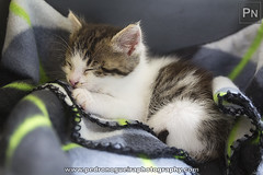 Deserved nap (Pedro Nogueira Photography) Tags: pet pets animal cat photography kitty kittens domestic gato domstico patuska pedronogueira pedronogueiraphotography