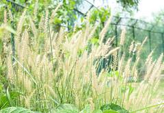 Natural (delwarFahad) Tags: sunset sea sky plants white plant green nature field grass landscape warnemnde nikon dof bokeh outdoor natur pflanzen bluesky baltic depthoffield ostsee naturescenes