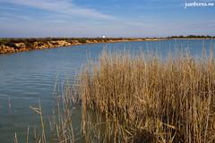 Juncos (juanhorea.me) Tags: sea espaa mar spain murcia mediterraneansea sanpedrodelpinatar salinasyarenalesdesanpedrodelpinatar marmediterrrneo
