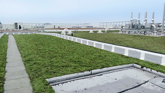 Wheaton-High-School-Silver-Spring-Maryland-Green-Living-Roof-by-LiveRoof (LiveRoof) Tags: greenroof livingroof clarksburgmaryland silverspringmaryland liveroof wheatonhighschool montgomerycountypublicschools riverbendnursery wilsonwimselementaryschool
