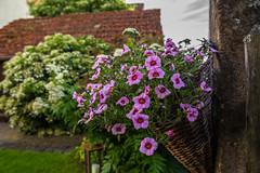 Flower Basket (Alias_Axel_Ryder) Tags: pink flowers 6 flower green alex barn canon fence garden eos basket d schuppen himmel blumen axel alexander grn ryder tamron dach garten korb 2470 wiesner