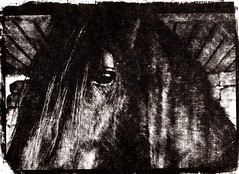 Cavallo (www.luigiredavide.com) Tags: camera horse white black eye digital photography ancient room digitale craft rubber antica clear negative printing contact fotografia stalla technique stable chiara cavallo bianco negativo nero occhio mane gumbichromate antiche arabica gomma tecnica uvrays stampa criniera artigianale contatto raggiuv gommabicromatata tecnoche dicromatata
