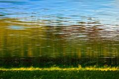Upside down (Peter PeBe Bosko) Tags: nature colors grass yellow river creativity mirror colours natural upsidedown creative naturallight slovensko slovakia gras nikkor 90mm priroda slowakei 28300mm poprad mirroring 28300 trava rieka d610 naturelight odraz farby breh nikonphotography farbicky naopak nikond610 horenohami riekapoprad