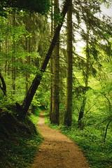 The Path in the Woods (Lord Demise) Tags: tree forest trekking canon germany deutschland outdoor hiking path trail wald baum wandern weg rheinlandpfalz pfad hunsrck rhinelandpalatinate 70d traumpfad niederfell traumpfade schwalberstieg