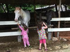 Horses (Caitlinator) Tags: ranch trip travel horses robin sisters hotel christina guatemala elremate palominoranchhotel