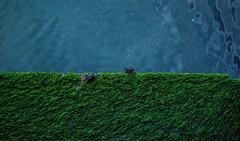 Half n Half (carmenalejandra.delatorre) Tags: sanfrancisco blue sea green water moss san francisco