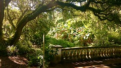 Carboniferous gushing sapping water rushing gullied rutting natural plumbing carved into the forestfloor it's so sunny (bjeffersonimages) Tags: bridge oak live banana palm sarasota brookside