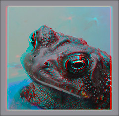 Mr. Grumpy - Anaglyph 3D (DarkOnus) Tags: macro closeup stereogram 3d phone mr pennsylvania cell 8 anaglyph stereo toad mate grumpy stereography buckscounty huawei darkonus