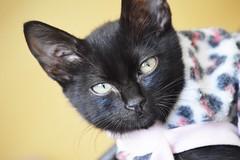 Penlope (mara.arantes) Tags: portrait pet baby house black green animals cat flickr retrato kitty