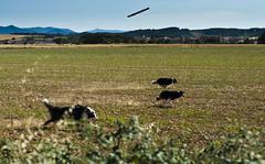Velocidad 257/365 (Susana RC) Tags: naturaleza perro animales 365