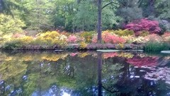 Water Colour Symmetry (dkhlucy) Tags: colour water flora norfolk azalea rhododendrons meltonconstable stodylodge