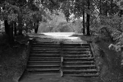 (kryshen) Tags: old trees blackandwhite bw wet water rain stairs russia nobody stairway petrozavodsk