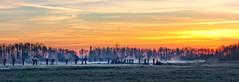 The gathering (Jorden Esser - taking a break) Tags: trees winter misty fog sunrise frost mystical pollard hss sundawn middendelfland coppicedwood sliderssunday