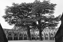Salisbury Cathedral trees (loop_oh) Tags: uk greatbritain church court garden cathedral unitedkingdom kathedrale salisbury salisburycathedral