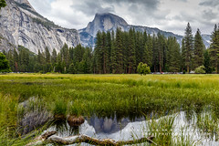 Half Dome Reflection (rkpunnamraju) Tags: meadow nationalforest nationalpark nps skyline clouds pond water reflection yosemitevalley halfdome yosemite