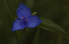 Yellow dots (tsandra996) Tags: blue flower green yellow flora