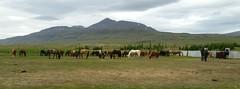 Friday: Galtará – Aðalmannsvatn – Lauftún Holiday Farm (EdRyder) Tags: iceland ishestar kjoluriceland kjolur