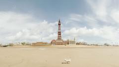 Blackpool Tower (liferichgrass) Tags: 169 blackpooltower panorama panoramic seaside blackpool beach lancashire england uk unitedkingdom englishseaside nikon wide fylde d3200 priapic sandy sand tower