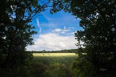 2016 Fenster zum Feld (jeho75) Tags: sony ilce 7m2 minolta md rokkor 28mm f28 deutschland germany harz feld corn acker silhouette sommer
