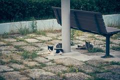 DSC06746 1 (hyeonseokoo) Tags: cat
