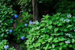 35Yamada Pond Park (anglo10) Tags: sunset flower japan