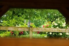 IMG_3762 (joyannmadd) Tags: amish horses intercourse pennsylvania kitchenkettlevillage farm animals lancaster coumty pa farms nature outdoors