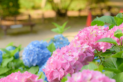 25Yamada Pond Park (anglo10) Tags: flower japan