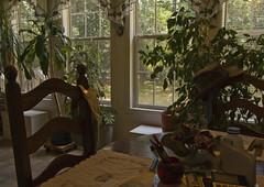 IMG_0022 Balance (oldimageshoppe) Tags: summer sunshine balance windowlight fluorescentlight