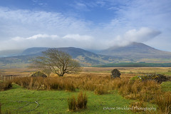 morning in Donegal (Anne Strickland) Tags: ireland donegal countydonegal irishcountryside rurallandscapes irishlandscapes countrylandscapes annestricklandphotography