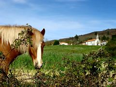 Águas Frias (Chaves) - ... o olhar curioso do cavalo ... (Mário Silva) Tags: primavera portugal natureza chaves aldeia trasosmontes 2013 ilustrarportugal águasfrias