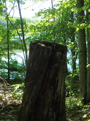 stump (ldoone3) Tags: camp